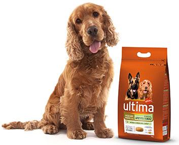 Verdeesvida un alimento especial para perros glotones - Novedades para mascotas ...