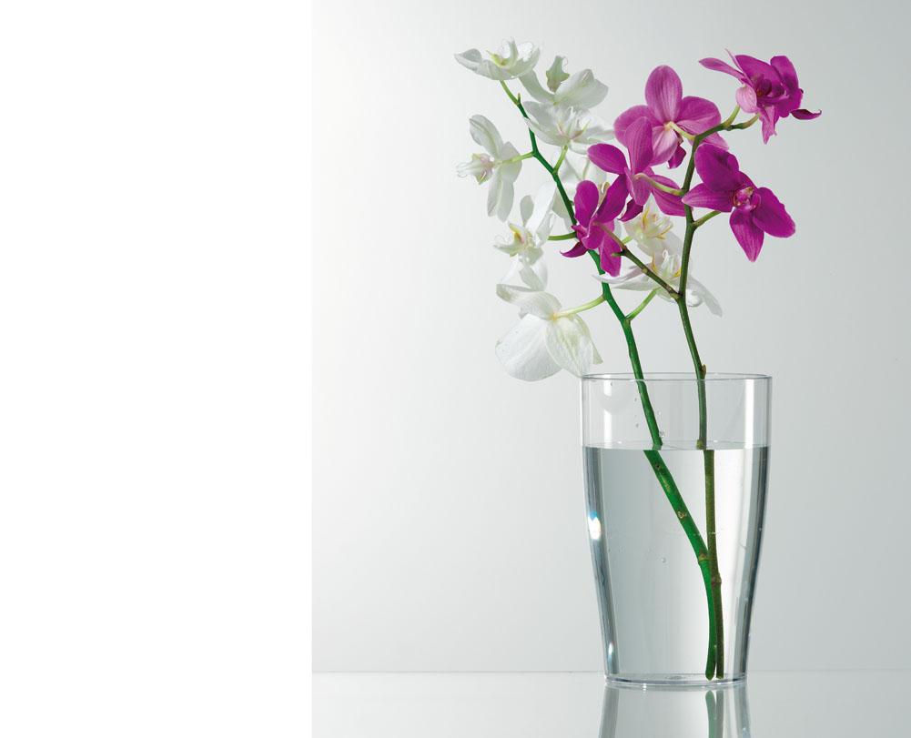 Verdeesvida un vaso transparente para las orqu deas - Tiestos para orquideas ...
