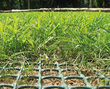 Verdeesvida malla de protecci n para el c sped natural - Como plantar cesped en el jardin ...