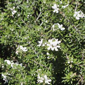 e09c82032feda verdeesvida    Fichas de plantas