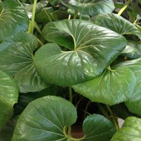Verdeesvida fichas de plantas - Plantas interior grandes ...