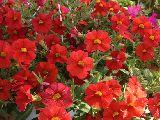 Verdeesvida plantas de exterior e interior - Plantas de exterior resistentes al frio y al calor fotos ...