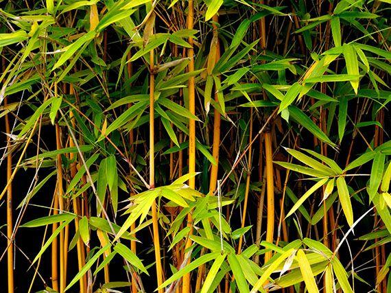 Verdeesvida la serenidad del bamb 2 parte - Cultivo del bambu ...