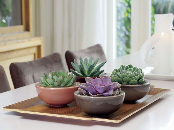 Verdeesvida la creatividad de las crasas 1 parte for Cactus cuidados exterior