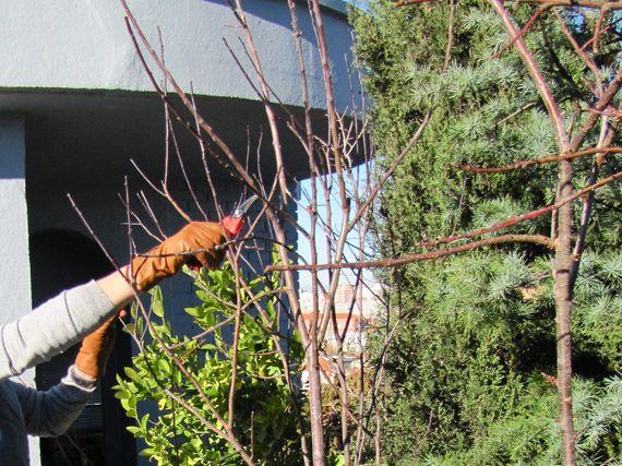 Verdeesvida cu ndo toca podar los arbustos de flor for Cuando podar cerezos y ciruelos