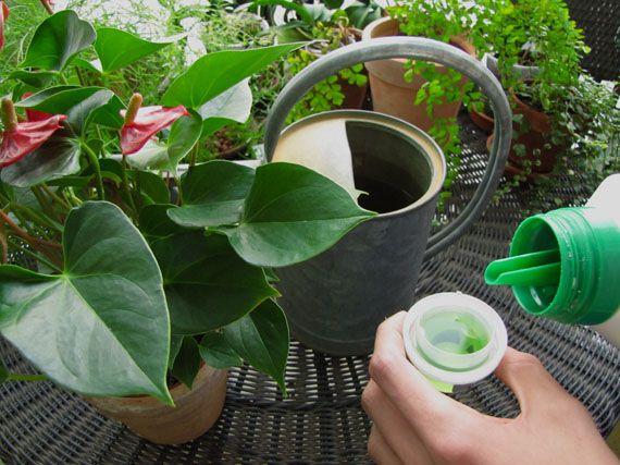 Verdeesvida abonar las plantas por qu cu ndo de for Abono para plantas de interior