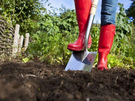 Verdeesvida abonos org nicos para revitalizar los suelos for Suelo organico para dibujar