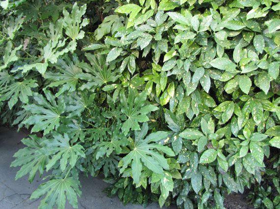 Verdeesvida Plantas Que Aman La Sombra - Plantas-exterior-resistentes
