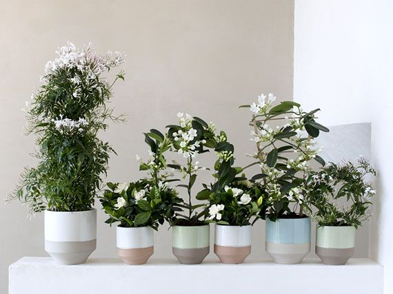 Verdeesvida fragancia de flores blancas dentro de casa for Casas decoradas con plantas naturales
