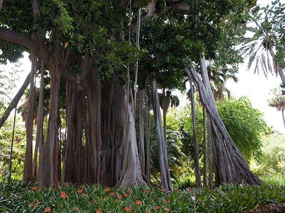 Verdeesvida jard n de la orotava un tesoro de joyas tropicales - Jardines de franchy la orotava ...