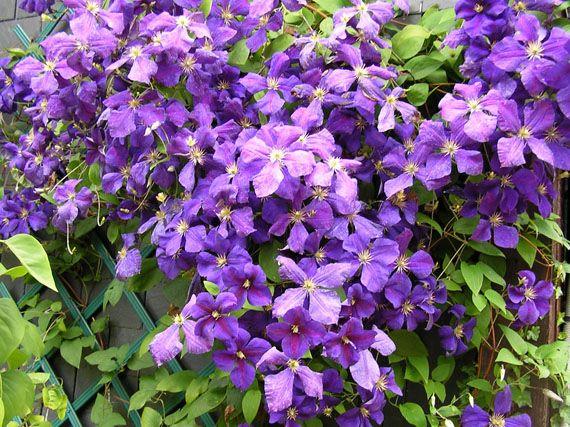 Resultado de imagen de flores color malva