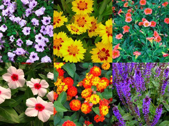 Verdeesvida Flores De Primavera Verano