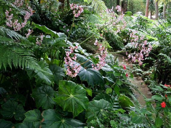 Verdeesvida jardines de sombra for Plantas en jardines pequenos