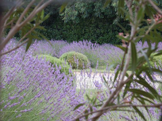 Verdeesvida arom ticas en el jard n el perfume de la provenza - Plantas aromaticas jardin ...