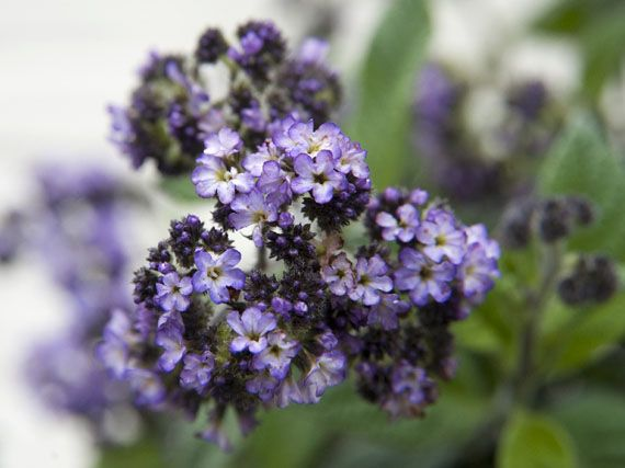 Verdeesvida flores de temporada aromas naturales for Plantas temporada