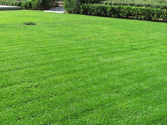 Verdeesvida c mo reparar un c sped deteriorado for Tipos de cesped natural para jardin