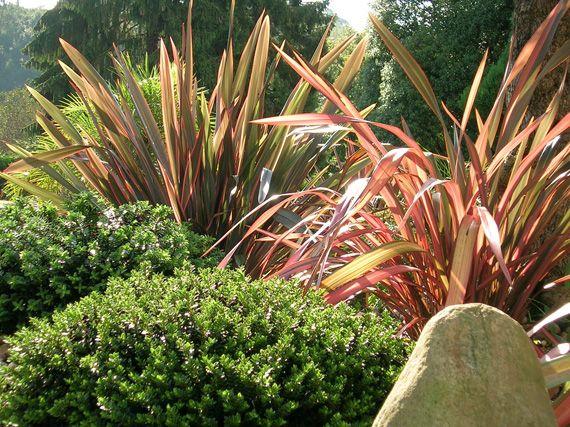 Verdeesvida phormium se llevan las rayas - Plantas de exterior resistentes al frio ...