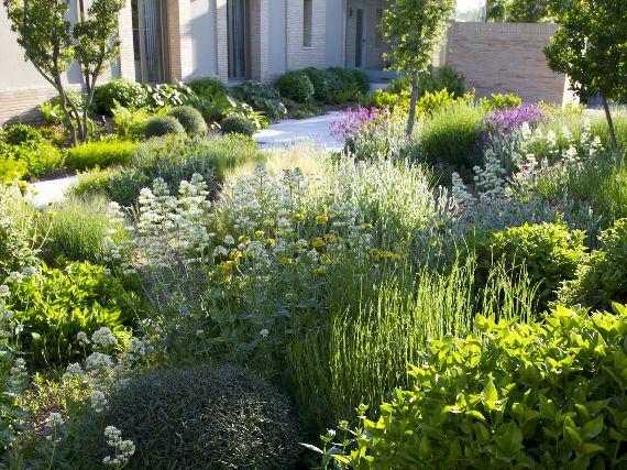 Verdeesvida jardines exuberantes de bajo riego 1 parte for Riego de jardines
