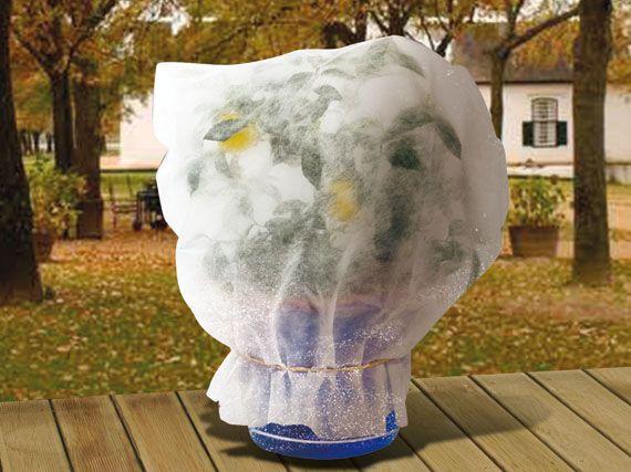 Resultado de imagen de proteger las plantas del frio