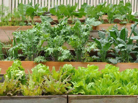 Verdeesvida cultivar un huerto ecol gico - Que plantar en el huerto ...