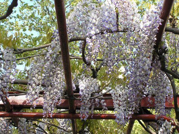 Verdeesvida jardines de aromas fragancias en flor for Flores de jardin exterior