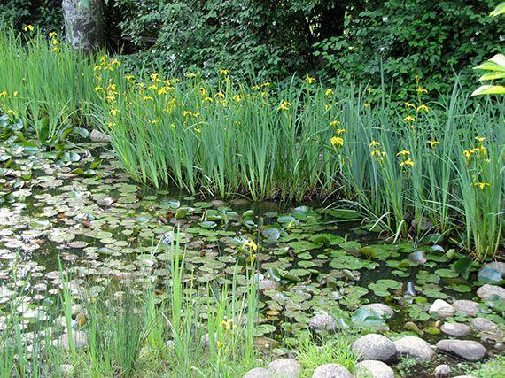 Verdeesvida el ecosistema de un estanque for Jardines acuaticos