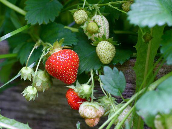 verdeesvida :: frutos del bosque en la terraza