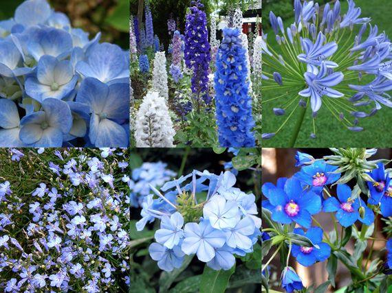 Verdeesvida verano azul flores fr as para los d as - Plantas de exterior con flor ...
