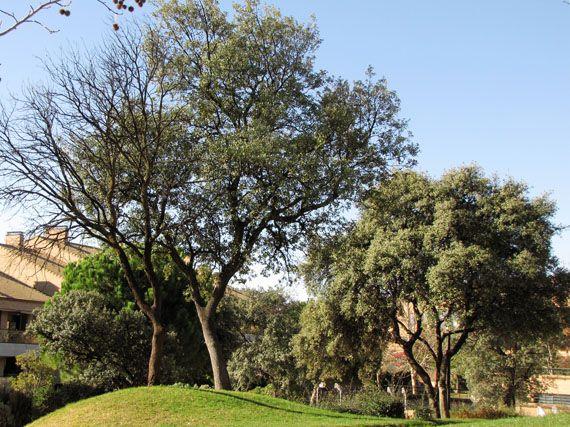 Arboles que den sombra huerto de nogal en la provincia for Arboles jardin sombra