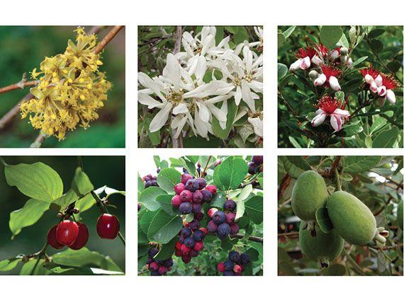 Verdeesvida el jard n comestible 8 arbustos de for Arbustos jardin pequeno