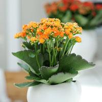 Verdeesvida Las Plantas De Interior Mas Resistentes - Plantas-interior-con-flor