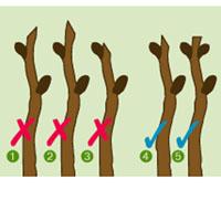 Verdeesvida Cuándo Toca Podar Los Arbustos De Flor