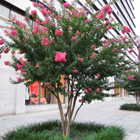 Flores resistentes al sol stunning colgantes resistente - Plantas de exterior resistentes al calor ...