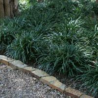 plantas de flor para jardines de sombra
