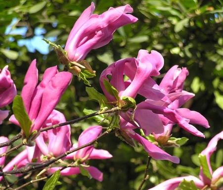 Garden sopelana mundo verde jardinarium agenda y - Abono para magnolios ...