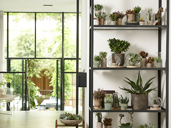 Decorar con plantas crasas