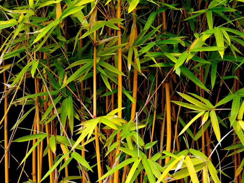 verdeesvida :: La serenidad del bambú (2ª parte)