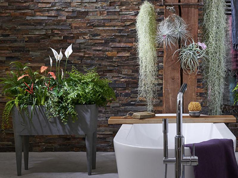 verdeesvida :: Un cuarto de baño ¡lleno de plantas!